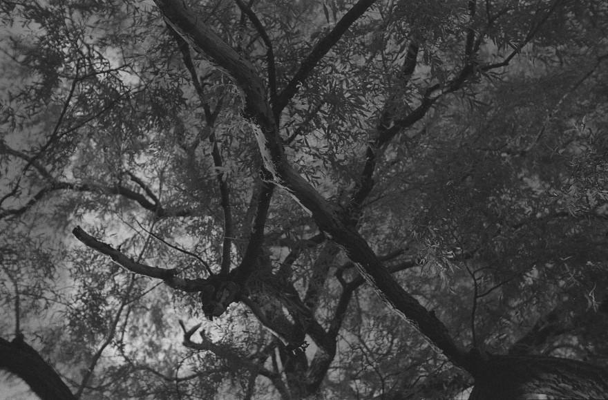 WillowWood-Enchantment