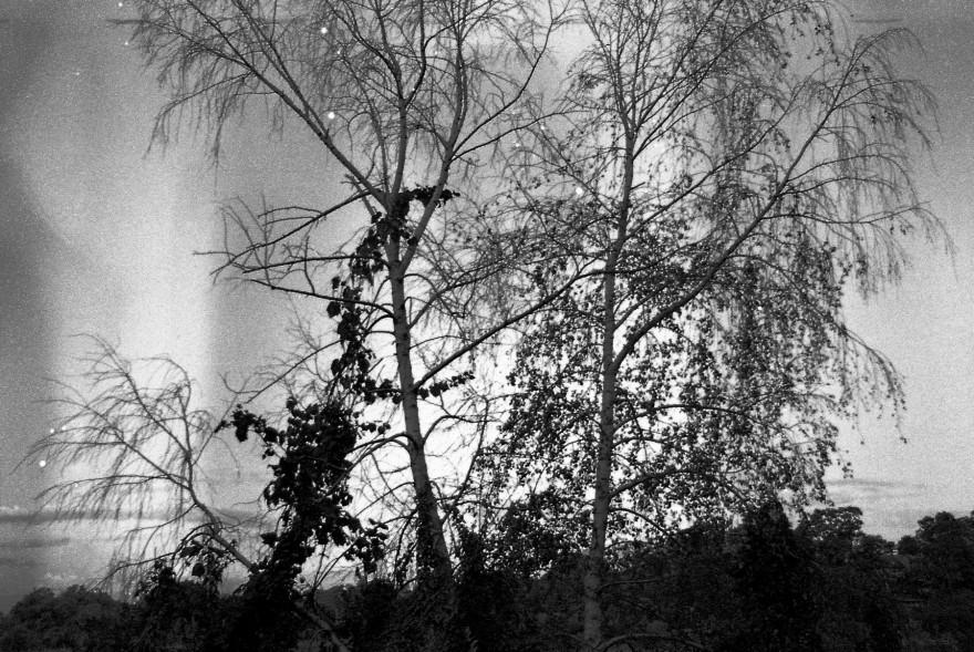 Birch & Vine